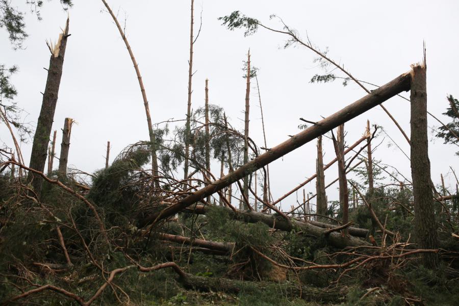 Widok na zniszczony przez nawałnice las w okolicy miejscowości Nowa Cerkiew