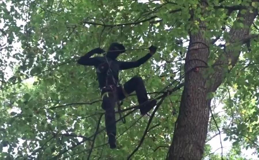 Niemieccy ekolodzy na drzewach