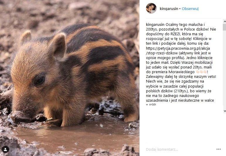 Kinga Rusin w obronie dzików
