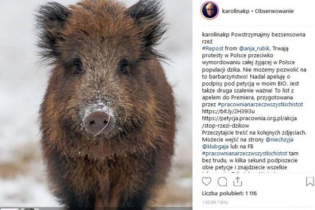 Karolina Korwin Piotrowska w obronie dzików