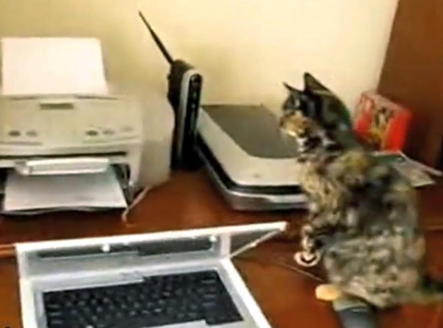 Kot kontra drukarka. Kto wygrał?