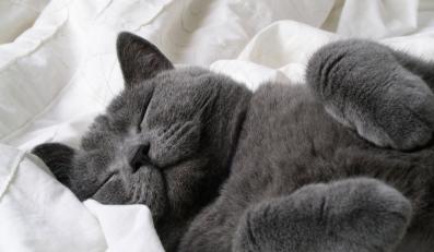 32-proc. ankietowanych jest gotowych sprzedać swój majątek, by mieć środki na opłacenie drogich zabiegów weterynaryjnych swojego chorego kota