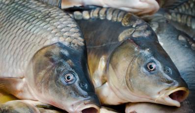 85 proc. światowych zasobów ryb zniknie, jeżeli nie podejmiemy działań na czas
