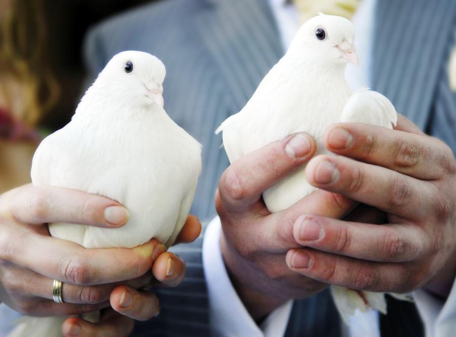 Karmisz gołębie? Stracisz wzrok