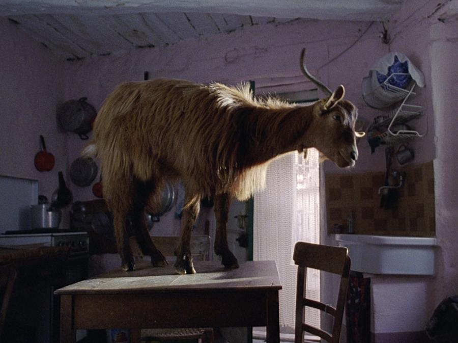 Koza z filmu \