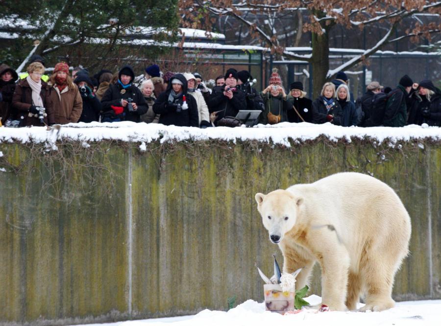 5 grudnia 2010 - czwarte urodziny Knuta w berlińskim zoo