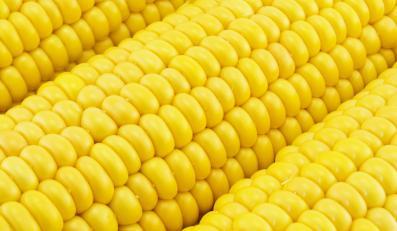 Kukurydza staje się rarytasem