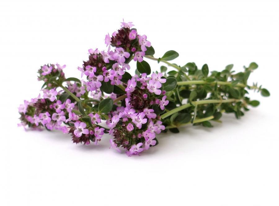 7. Preparaty ziołowe