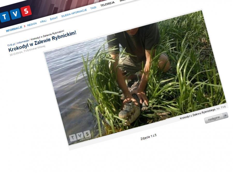 Wędkarze złapali żywego krokodyla