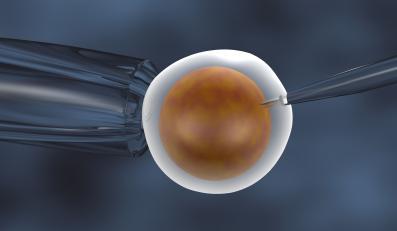 In vitro