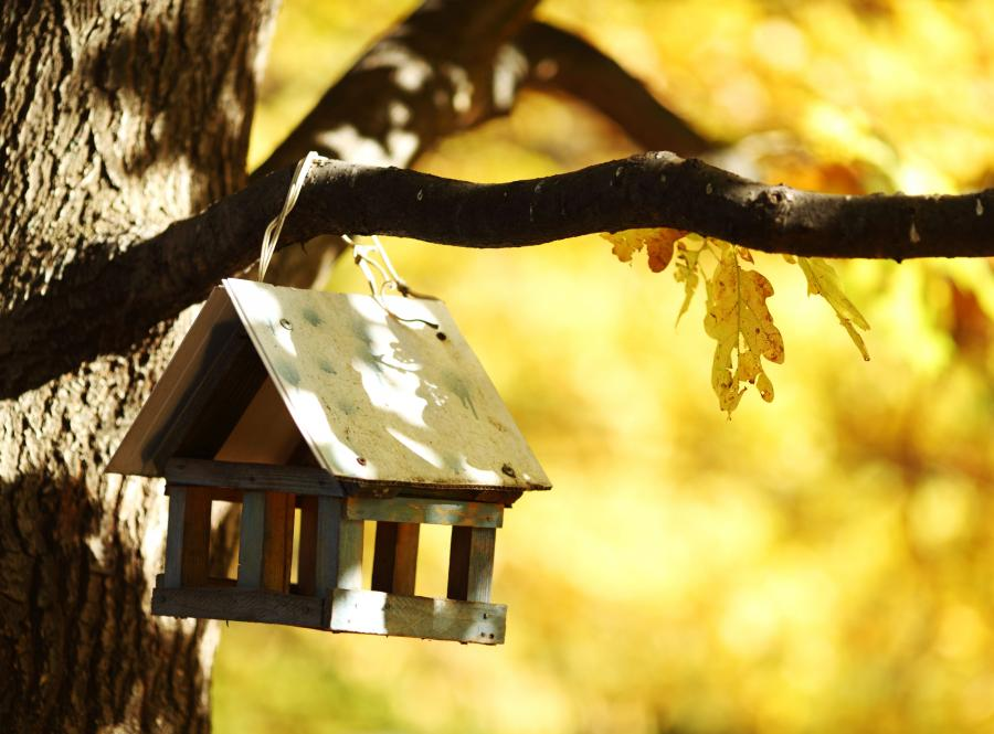 Domek na drzewie, ale dla ptaków (zdjęcie ilustracyjne)