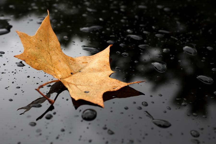Liść na deszczu