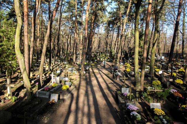 Cmentarz leśny w Laskach