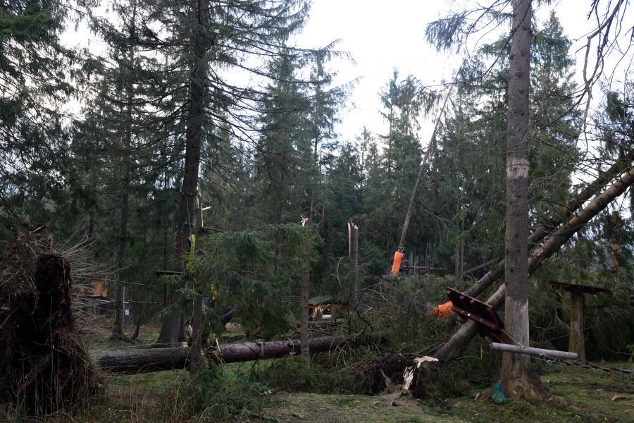 Połamane drzewa