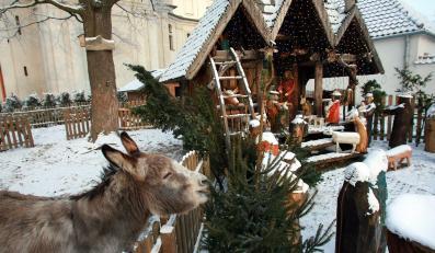 Świąteczna stajenka w kościele kamedułów w Warszawie