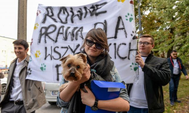 Happening NowoczesnejPl przed siedzibą Solidarności. Członkowie partii domagali się równości dla psów [FOTO]