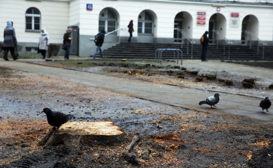Wycięte drzewa w centrum Warszawy
