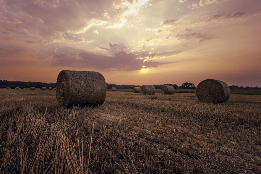 rolnik ,rolnictwo
